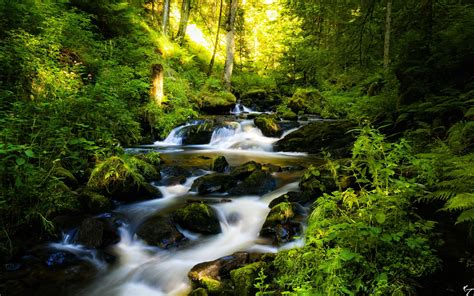 Black Forest in Germany Wallpapers   HD Wallpapers   ID #9934