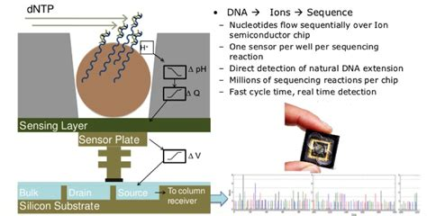 group_3_presentation_1_-_next_generation_sequencing - Wiki