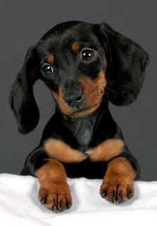 Most Famous Dog Names - Annie Many